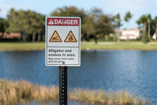 """Danger Alligator And Snakes I..."