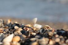 Sandy Beach With Many Shells