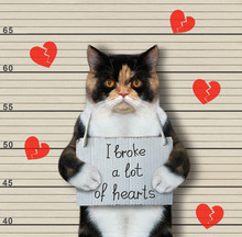 The Multicolored Cat Was Arrested. It Has A Sign Around Its Neck That Says I Broke A Lot Of Hearts. Lineup Beige Background.