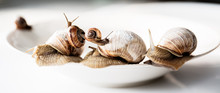 Large And Small Snails Move On A White Plate Slowly Moving In A Chaotic Manner.