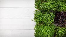 Microgreens On White Plank Bac...