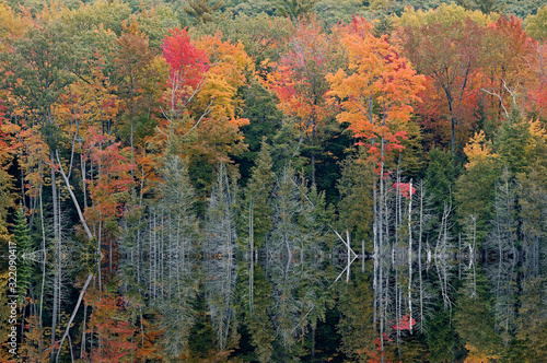 Vászonkép Autumn shoreline of Tucker Lake with mirrored reflections in calm water, Sleepin