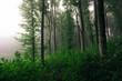 Leinwanddruck Bild edge of forest with green foliage, lush vegetation woods landscape