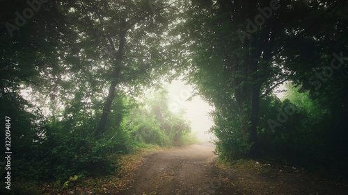 Fototapeta misty forest path, rainy weather fantasy landscape obraz