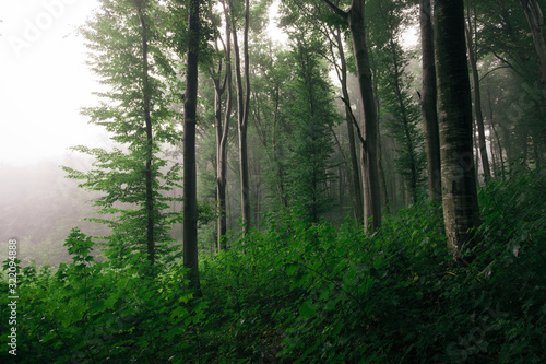 Fototapeta edge of forest with green foliage, lush vegetation woods landscape obraz