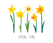 Floral Illustration. Vector Elements Isolated On White Background. Greeting Card Template For Bright Spring Design. Garden Flowers. Yellow Narcissus. Handwritten Lettering. Spring Time. Womens Day