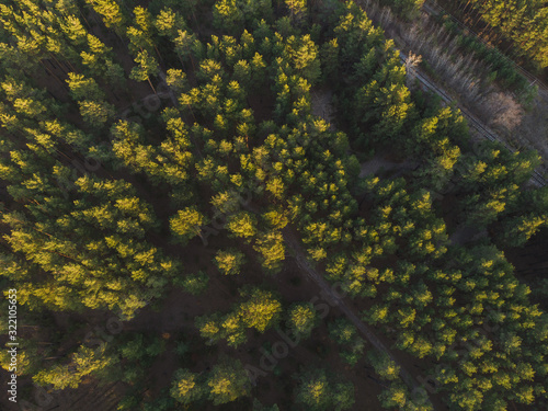 Fototapeta Aerial view of summer siberian forest obraz