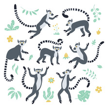 Cute Funny Ring-tailed Lemurs ...