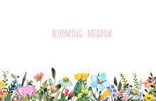 Horizontal Wildflower Border. Bright Colorful Summer Flowers, Greenery Leaves, Grass, Isolated On White Background. Watercolor Botanical Illustration