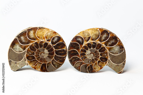 Photo two halves of a sawn ammonite fossil shell isolated on white background