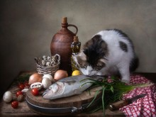 Still Life With Fish And Curious Fluffy Cat
