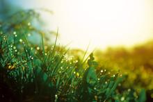 Fresh Morning Dew On Spring Gr...
