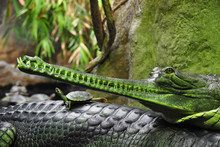 Detail Photo Of Gharial. The G...