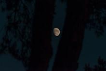 The Moon Between Trees