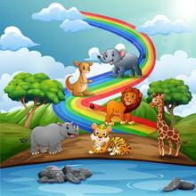 Many Wild Animals Over The Rai...
