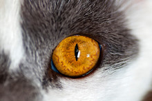 One Cat's Eye Close-up