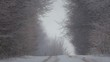 Forest winter road in a blizzard. View of the forest road in heavy snow.