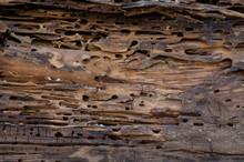 Old Wood Damaged By Bark Beetle