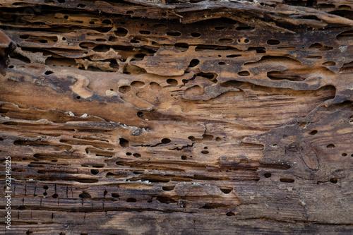 Fotografie, Obraz Old wood damaged by bark beetle