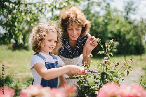 Small girl with senior grandmother gardening in the backyard garden Fototapete
