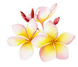 canvas print picture - Watercolor illustration of a beautiful tropical exotic flower plumeria or frangipani.