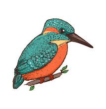 Kingfisher Vector Illustration. Hand Drawn Kingfisher Bird. Colorful Illustration. Alcedinidae Bird Sitting On A Branch.