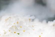 Natural Background Of White Li...