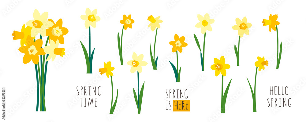 Fototapeta Vector set of yellow daffodils isolated on white background. Early spring garden flowers. Bouquet of narcissuses. Clip art for bright festive greeting card, poster, banner. Handwritten lettering