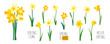 Vector set of yellow daffodils isolated on white background. Early spring garden flowers. Bouquet of narcissuses. Clip art for bright festive greeting card, poster, banner. Handwritten lettering