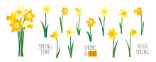Vector Set Of Yellow Daffodils...