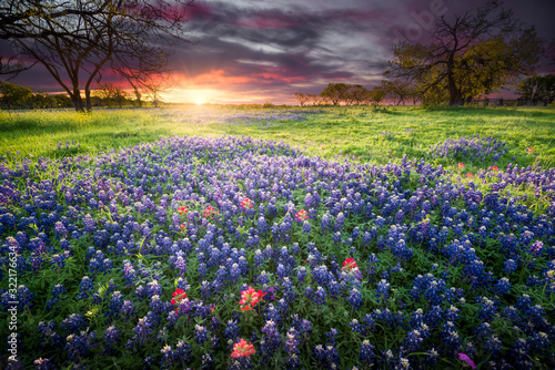 Photo Colorful Sunrise and Bluebonnets in the Texas Hill Country