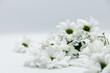Blumen Strauss Chrysanthemen Winterastern Valentinstag Liebe Love