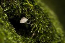 A Small White Mushroom Coming ...