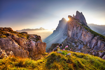 Amazing view on Seceda peak. Trentino Alto Adige, Dolomites Alps, South Tyrol, Italy, Europe. Odle mountain range, Val Gardena. Majestic Furchetta peak. Purple flowers in the morning sunlight.