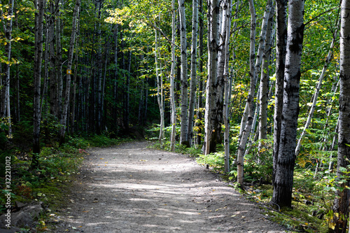 Fototapety, obrazy: A path in a national park in the Charlevoix region of Quebec, Canada.