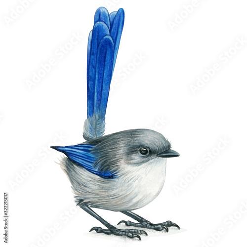 Fotografia Fairy wren hand drawn bird watercolor colored pencils