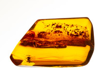 P1010008 Piece Of Baltic Amber...