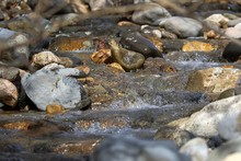 川底にある石や岩や砂...