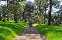 Hiking In Golden Gate Park In ...