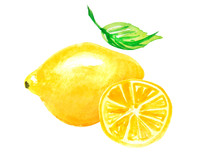 Watercolor Logo - Lemon Illust...
