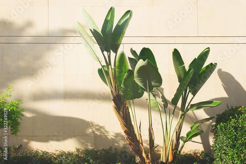 bananowe-drzewo-w-letni-dzien