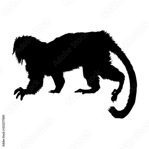 Cottontop Tamarin (Saguinus Oedipus) Silhouette Vector Found In Map Of South America Wall mural