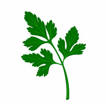 Leaf Parsley In The Style Of Flat.