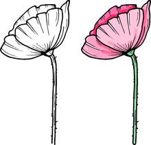 Hand Darwn Vector Poppy Flower...