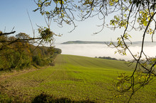 Misty Countryside At Arundel, ...