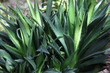 canvas print picture - Natürliche tropische Pflanze