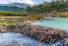 Beaver Dam On A Track To Lagun...
