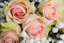 Beautiful Pink And White Roses...