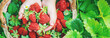 canvas print picture - The child collects strawberries in the garden. Selective focus.