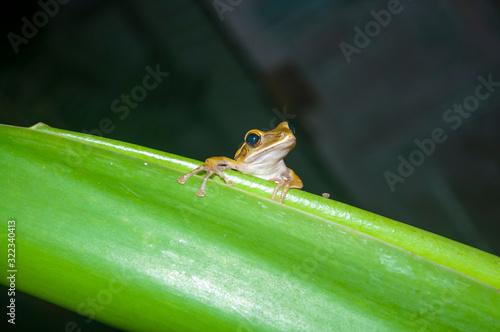 Photo little frog